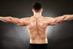 O homem atlético que faz o halterofilismo move-se para os músculos traseiros fotografia de stock