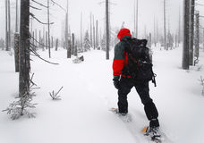 O homem atravessa as madeiras em snowshoes Imagens de Stock