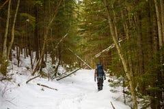 O homem backpacking na floresta do inverno fotografia de stock royalty free