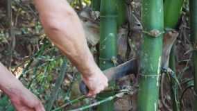 O homem caucasiano desbasta um bambu com o machete na floresta vídeos de arquivo