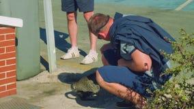 O homem caucasiano pets o gato desabrigado no porto em Ceuta vídeos de arquivo