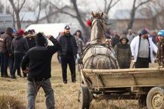O homem chicoteia um cavalo decorado que puxa um carro de madeira, antes de uma corrida de cavalos da celebração do esmagamento fotografia de stock royalty free