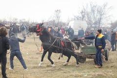 O homem chicoteia um cavalo decorado que puxa um carro de madeira, antes de uma corrida de cavalos da celebração do esmagamento fotos de stock royalty free