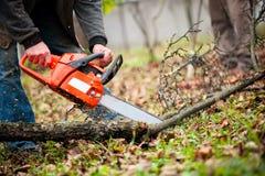 O homem com gasolina pôs a madeira do fogo do corte da serra de cadeia das árvores Foto de Stock Royalty Free