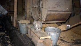 O homem com pá e a cubeta trabalham perto da máquina agrícola da peneiração closeup filme