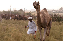O homem com seu camelo Imagem de Stock Royalty Free