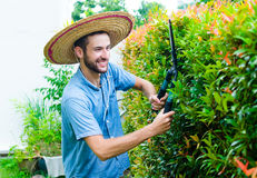 O homem corta arbustos Imagem de Stock Royalty Free