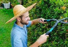 O homem corta arbustos Imagem de Stock