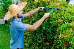 O homem corta arbustos Fotografia de Stock