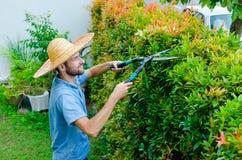 O homem corta arbustos Fotos de Stock Royalty Free