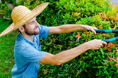O homem corta arbustos Foto de Stock Royalty Free