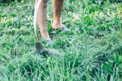 O homem cortou a sega da grama no jardim Fotografia de Stock Royalty Free