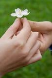 O homem dá a uma mulher uma flor fotografia de stock royalty free