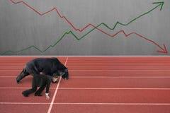 O homem de negócios e o urso estão prontos para competir na pista de atletismo foto de stock