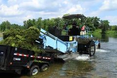 O homem descarrega ervas daninhas da ceifeira da erva daninha do lago Fotografia de Stock