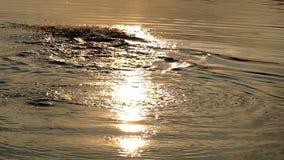 O homem desportivo nada a borboleta em um rio agradável no por do sol no verão filme