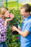 O homem deu a mulher que um perfumado vermelho aumentou Fotos de Stock Royalty Free