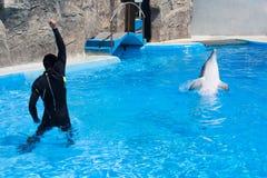 O homem do instrutor do treinador no terno de mergulho preto e o golfinho na associação de água no dolphinarium com água azul, tr foto de stock