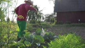 O homem do vaqueiro aplica produtos químicos no vegetal da couve com o pulverizador na casa 4K
