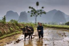 O homem e a mulher araram o campo de almofada, usando o búfalo, Guangxi, China Fotografia de Stock