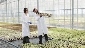 O homem e a mulher em vestes do laboratório trabalham com plantas verdes em uma estufa filme