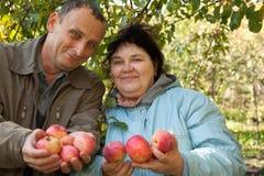 O homem e a mulher esticam para fora suas mãos com maçãs Fotografia de Stock Royalty Free