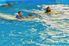 O homem e a mulher nadam com o golfinho na baía do ` s de Dolphine em Phuket, Tailândia Fotos de Stock Royalty Free