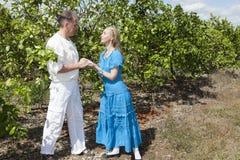 O homem e a mulher, par loving, fazem uma declaração do amor em uma plantação das laranjas, Cuba foto de stock royalty free