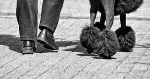 O homem e o cão que waling na rua, na parte do corpo de homem e no cão que andam na rua, no cão preto e equipam o pé, foto preto  Fotos de Stock Royalty Free