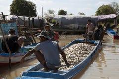 O homem em uma barca encheu-se dos peixes que dirigem para introduzir no mercado imagens de stock