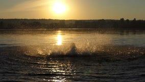 O homem engraçado faz círculos em um lago para apreciar no por do sol no slo-mo video estoque