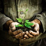 O homem entrega prender uma planta nova verde