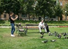 O homem está alimentando pombos Imagem de Stock Royalty Free