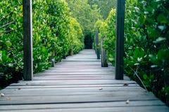 O homem está andando na ponte de madeira pequena à maneira da caminhada da natureza imagem de stock royalty free
