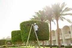 O homem está cortando árvores no jardineiro profissional do parque em um unif Imagem de Stock