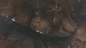 O homem feliz no revestimento amarelo gerencie na parte superior das rochas cobertas com a névoa video estoque