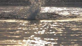 O homem forte nada a borboleta em águas do lago no por do sol no slo-mo filme