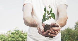 O homem idoso entrega prender uma planta nova verde vídeos de arquivo