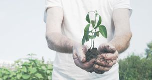 O homem idoso entrega prender uma planta nova verde video estoque