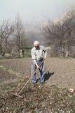 O homem idoso limpa as folhas secas do ancinho Imagens de Stock Royalty Free