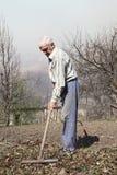 O homem idoso limpa as folhas secas do ancinho Fotografia de Stock