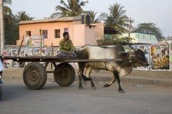 O homem indiano monta um carro puxado por um boi Índia, Goa - 3 de fevereiro de 2009 fotos de stock