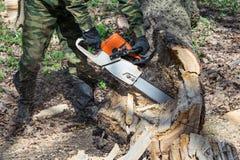 O homem na camuflagem, nas botas e nas luvas vê a árvore podre velha da serra de cadeia na floresta Imagens de Stock
