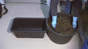 O homem nas luvas agita mexilhões crus na caixa plástica na cubeta preta com água suja lavagem Cozinha video estoque