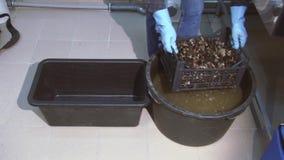 O homem nas luvas levanta e agita mexilhões crus na caixa plástica da cubeta preta com água suja lavagem vídeos de arquivo