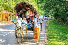 O homem nos sarongues está conduzindo um boi com um carro na estrada durante uma excursão com turistas imagem de stock