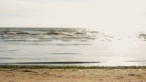 O homem novo faz a aleta na praia na câmera dianteira Ondas Sea Noite ensolarada do verão vídeos de arquivo