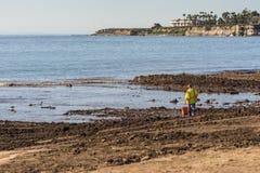 O homem novo procura restos na sujeira, Santa Barbara fotografia de stock