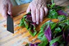 O homem prepara verdes frescos do amaranto Foto de Stock