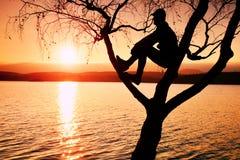 O homem senta-se na árvore Silhueta do menino solitário com o boné de beisebol no ramo da árvore de vidoeiro na praia Fotografia de Stock Royalty Free